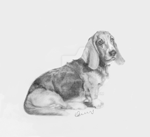 Bassett by Billberry