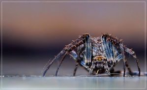 macro with wide kit lens by kimerajam