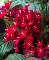 Red Stars... by FeliFee