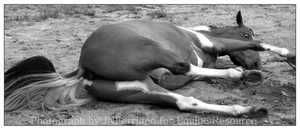 For Equine Resource: Rolling06 by JNFerrigno