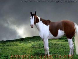 American Made Paints by MaryAnnStock