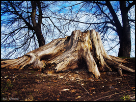 Tree Stump by IiTz-ShAnE