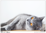 My Cat by Davy-Chico-Loco