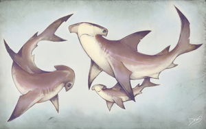 HammerHead Sharks Family by 6Doug9