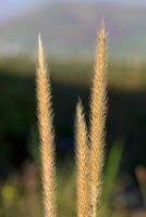Grass by cprmay
