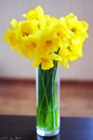 Daffodils 103_366 by eugene-dune