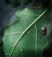 Jim The Spider by EdithSparrow