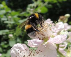 bee by stock1-2-3