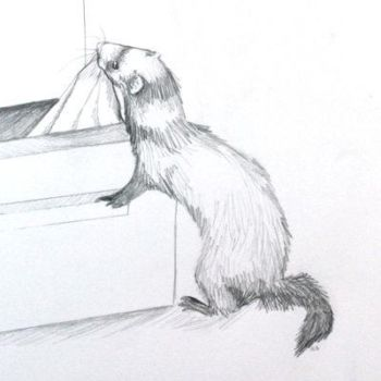 Ferret sketch by extreme-anime-girl