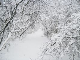 Forest Path in Winter 3 by Martut