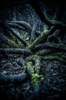 nature is coming for me i feel her fingers on me by ateist-kleranty