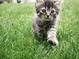 One Small Step For A Kitten by missamyyxxx
