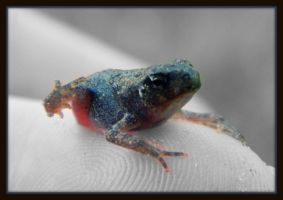 Baby Toad by DeniseSchingeck