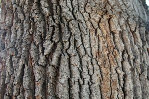 Tree Texture Stock 3 by mrwit
