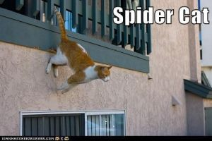 SPIDERCAT by SorceressRaven