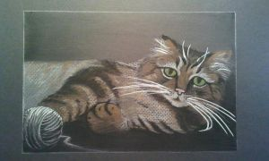 My cat Bob, the maine coon by dannabats