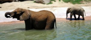 Elephant Mother and Baby by transientangel