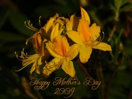 Happy Mother's Day 2009 by webcruiser