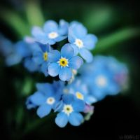 spring in your yard. by simoendli