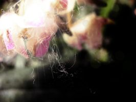 The Flowerly Light. by xJNFR