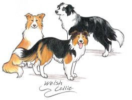 Welsh Collies by WildSpiritWolf