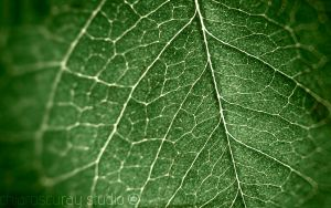 leaf of life by chiaroscuray