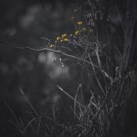 Untitled Yellow Flowers by DeniseBayles