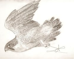 Peregrine Falcon by ArtsMermaid