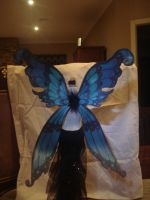 fary wings for msd by Leanne-Inwood