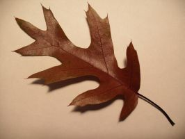 Fall Leaf-1 by Rubyfire14-Stock