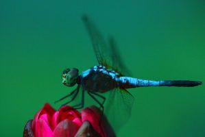 Dragon Fly by AjDev
