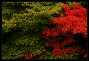 The transition of the seasons by Batteryhq