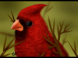 Red bird by Forever-Wolfy