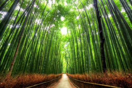 Bamboo Forest Kyoto by Kaboose-18