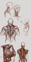 Anatomy of the Neck and Torso by BABAGANOOSH99