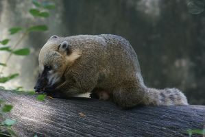 Zoo Berlin Impressions 10 by webcruiser