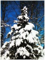 Snow Covered by BeckyMarie73