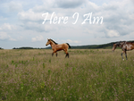 Here I Am by WildHorses21