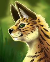 Serval by firedanceryote
