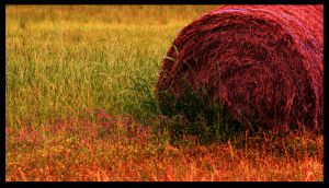 Field Of Hay by RobertRobledo
