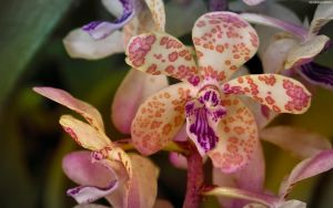 Orchid with Warmth Filter by StarwaltDesign