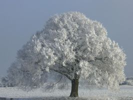 Stock Image - Tree - Winter - 02 by Life-For-Sale
