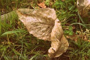 Feuille . by Melanie-photography