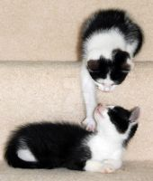 Kittens Playing by Leannz0r