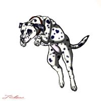 Dalmatian by Jodow