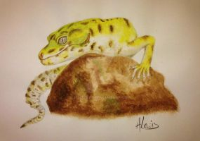 Leopard Gecko (Water Colour Painting) by AimzzArt