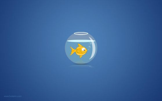 My Gold fish by hotamr