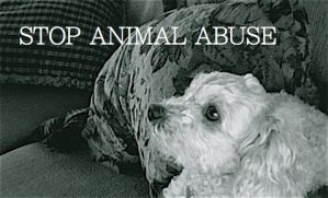 STOP ANIMAL ABUSE by Alayss