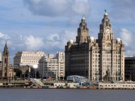 Liver building by piglet365