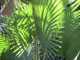 Palms in the Sun 3 by Enalon